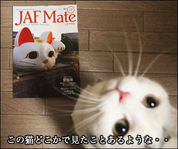 JAF Mateの猫-3コマ