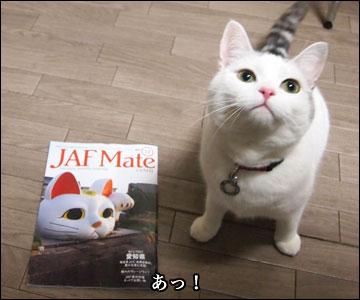 JAF Mateの猫-4コマ