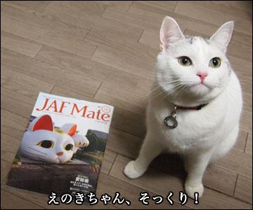 JAF Mateの猫-5コマ