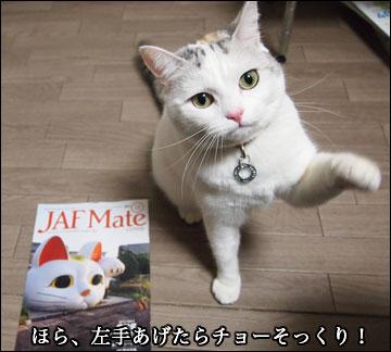JAF Mateの猫-6コマ