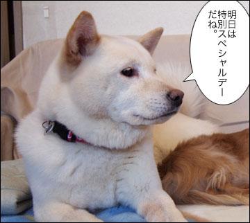 明日は特別スペシャルデー-1コマ