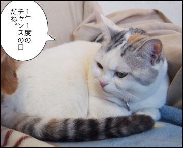 明日は特別スペシャルデー-2コマ