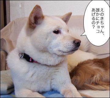 明日は特別スペシャルデー-3コマ