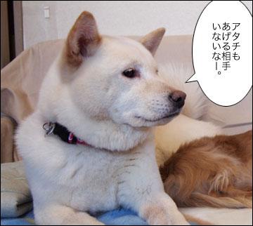 明日は特別スペシャルデー-5コマ