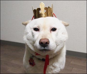 王冠-1コマ