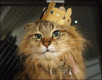 王冠-3コマ