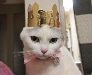 王冠-4コマ