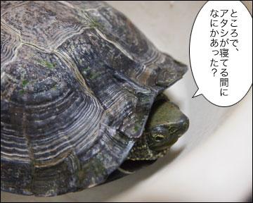 浦島まりりん-1コマ