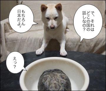 浦島まりりん-6コマ