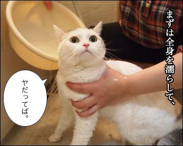 えのきの入浴シーン-2コマ