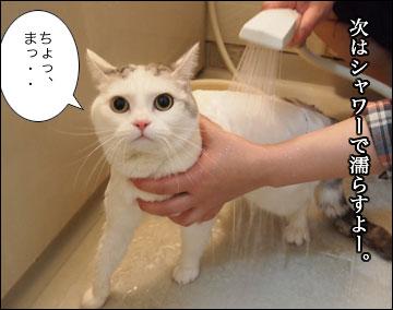 えのきの入浴シーン-3コマ