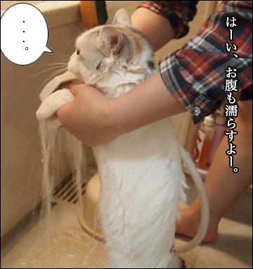 えのきの入浴シーン-4コマ