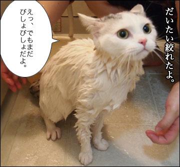 えのきの入浴シーン-10コマ