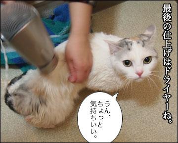 えのきの入浴シーン-12コマ