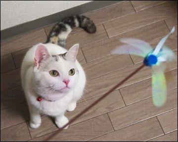 猫らしく-1コマ