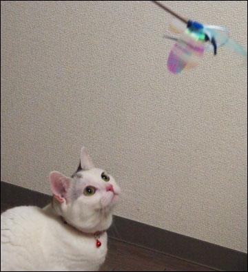 猫らしく-2コマ