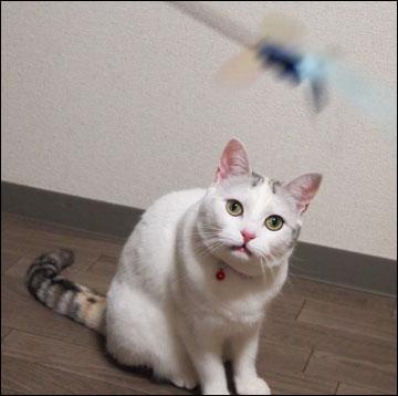 猫らしく-3コマ