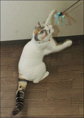 猫らしく-4コマ