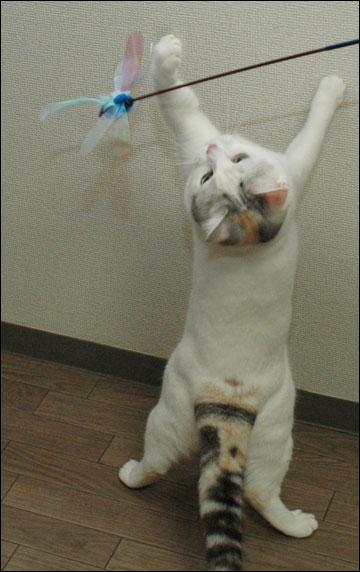 猫らしく-7コマ