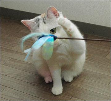 猫らしく-8コマ