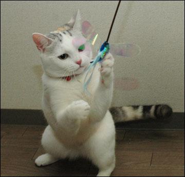 猫らしく-9コマ