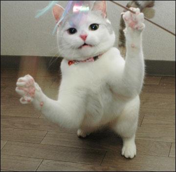 猫らしく-10コマ