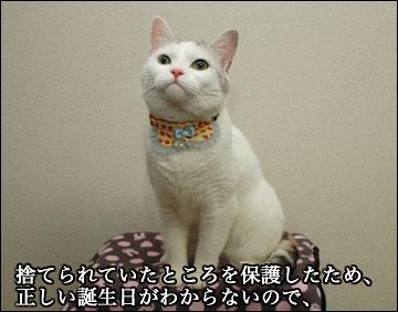 えのきちゃんの暫定誕生日-3コマ