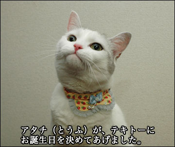 えのきちゃんの暫定誕生日-4コマ