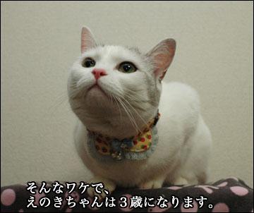 えのきちゃんの暫定誕生日-5コマ