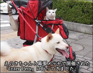 Inter Petsに行ってきた-1コマ