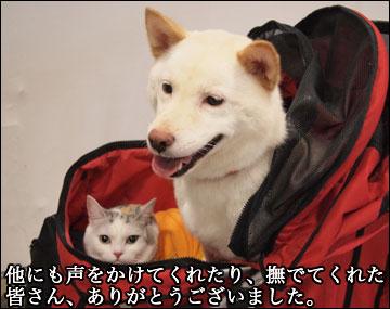 Inter Petsに行ってきた-6コマ