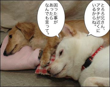 とろろ兄さんに添い寝-3コマ