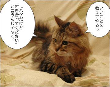 ネコ兄さんのアドバイス-4コマ