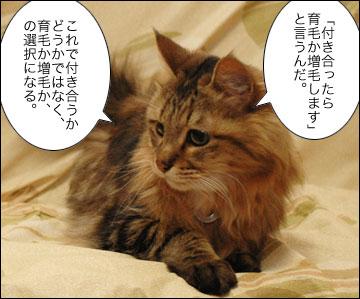 ネコ兄さんのアドバイス-5コマ