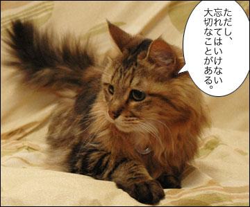 ネコ兄さんのアドバイス-7コマ