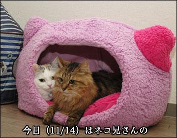 ネコ兄さんの誕生日-1コマ