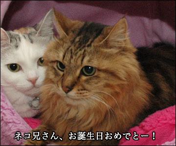 ネコ兄さんの誕生日-3コマ