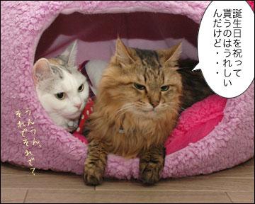 ネコ兄さんの誕生日-4コマ