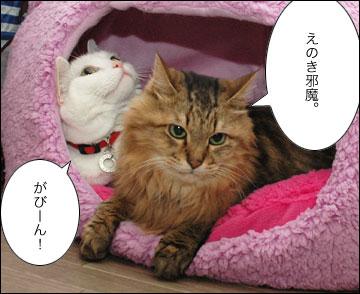 ネコ兄さんの誕生日-5コマ