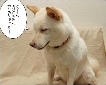 カメ姉さんの睡眠-2コマ