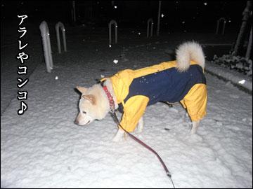 雪やコンコ-3コマ