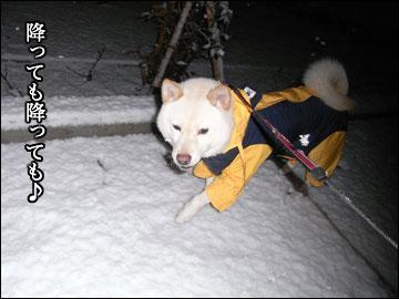 雪やコンコ-4コマ