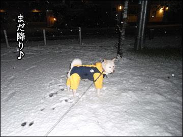 雪やコンコ-5コマ