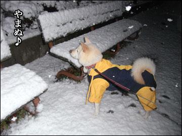 雪やコンコ-6コマ