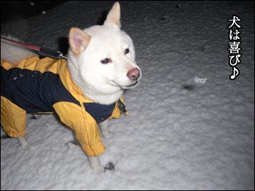 雪やコンコ-7コマ