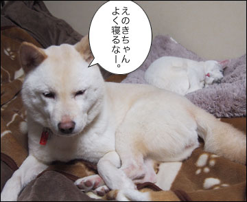 えのきちゃんの寝返り-2コマ