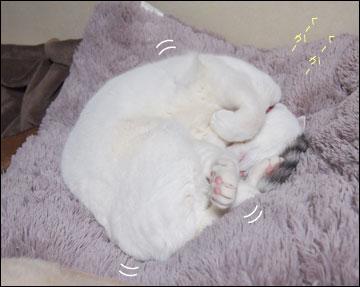 えのきちゃんの寝返り-3コマ