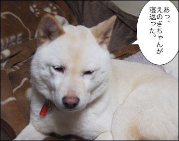 えのきちゃんの寝返り-5コマ