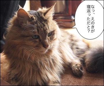 えのきちゃんの寝返り-6コマ