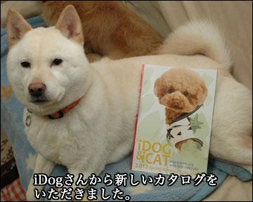 iDog/iCatさんのカタログ-1コマ